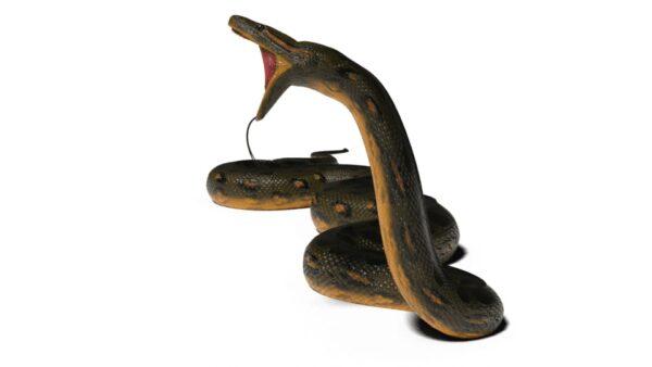 Anaconda 3d model