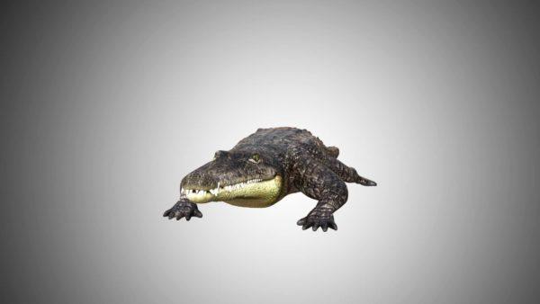 Crocodile alligator 3d model