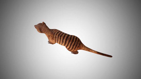 Mongoose 3d model