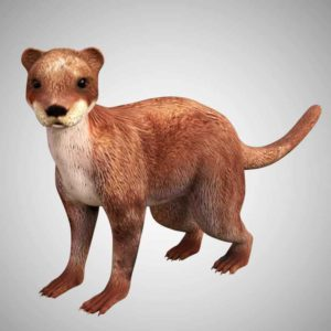 Otter 3d model