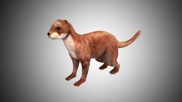 otter 3d model low poly
