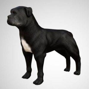 Pitbull dog 3d model
