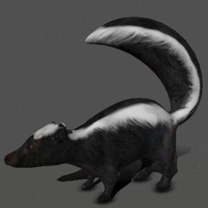Skunk 3d model