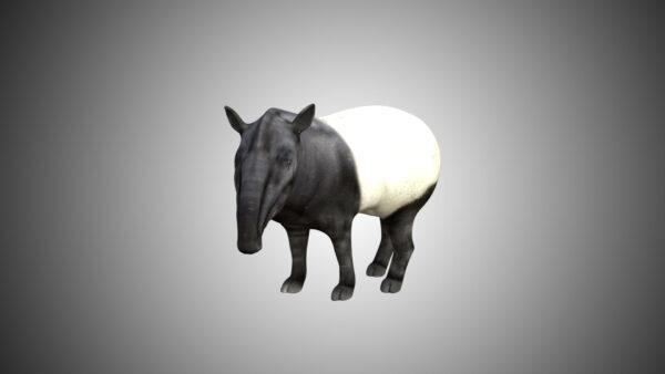 Tapir 3d model