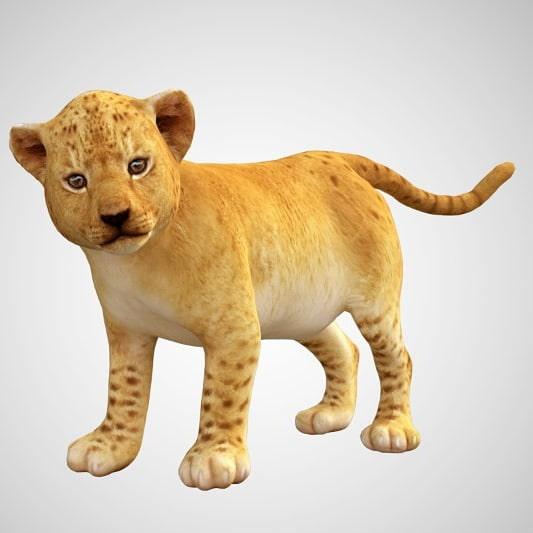 Baby lion cub 3d model