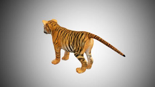Baby Tiger cub 3d model
