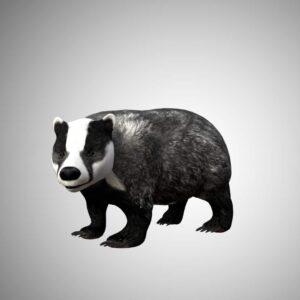Badger 3d model