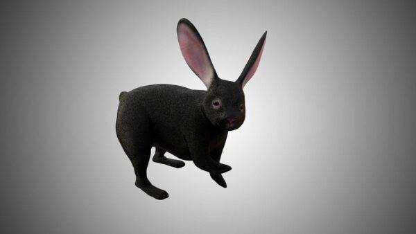 Black Rabbit 3d model