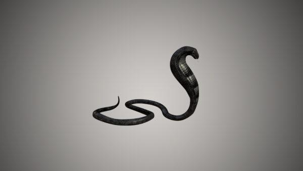 king cobra 3d model