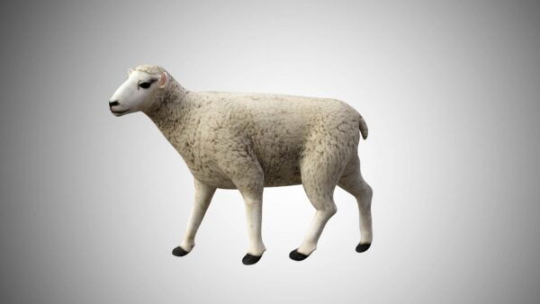 wool sheep 3d model