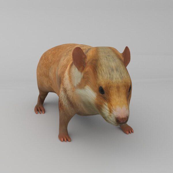 Hamster 3d model