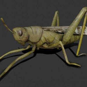 locust grasshopper 3d model