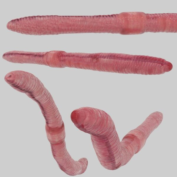 worms 3d model