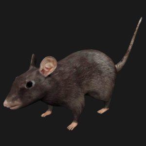 Black mouse 3d model
