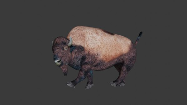 Bison 3d model