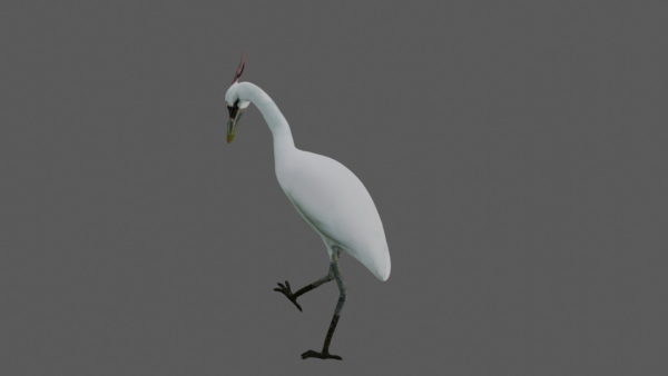 Crane bird 3d model