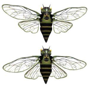 Cicada 3d model
