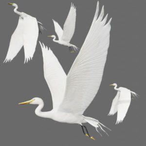 Egret 3d model