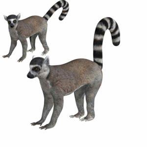 Lemur 3d model