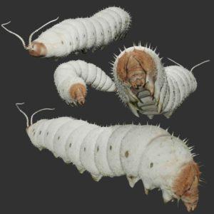 Silkworm 3d model