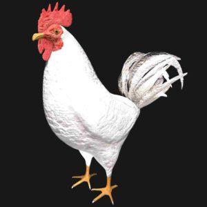 White hen 3d model